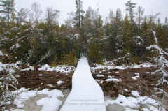 Ridges Sanctuary Winter Boardwalk